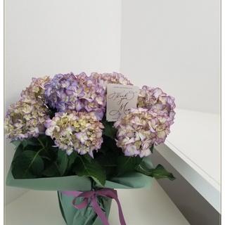また今年も紫陽花の季節がやって来ました♪