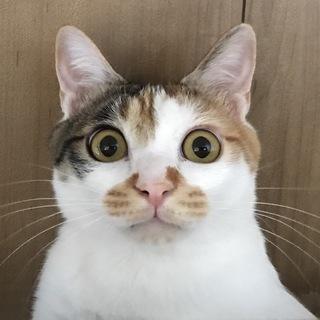 3度のご飯より遊ぶのが大好き!「三毛猫 まりもちゃん」まとめ