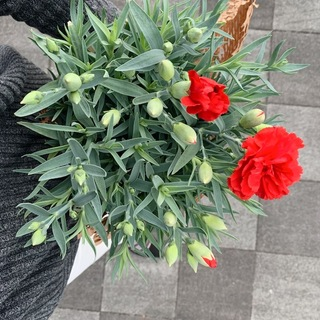 お花&植物のある生活