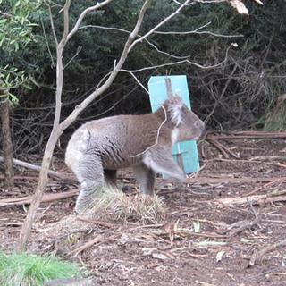 動物放し飼いの自然公園 Cleland Wildlife Park