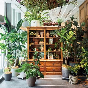 スタイリッシュな植物が揃うお店から人気大型店まで「都内のグリーンショップ」3選【グリーンを育てる幸せ、飾る楽しみ】