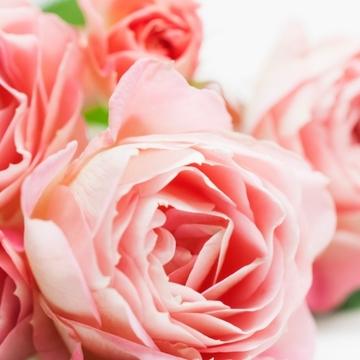 Jマダムたちが愛する花。それは・・