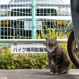 ですから、私は見ての通りバイクです!【水曜日のねこたちへ #129】