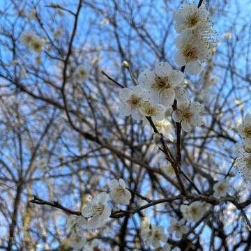 花粉症シーズン真っ只中!花粉症歴25年の私は、これで今年も乗り切ります。