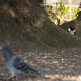 機会は鳥のごとし、飛び去らぬうちに捕まえよ【水曜日のねこたちへ #5】