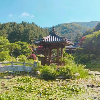 ソウルからプチ旅!並木道のお散歩とダッカルビ