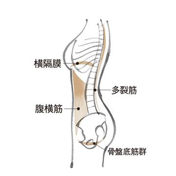 アラフィーの便秘、尿もれ、おなかぽっこりは「骨盤底筋群のケア」で解消!
