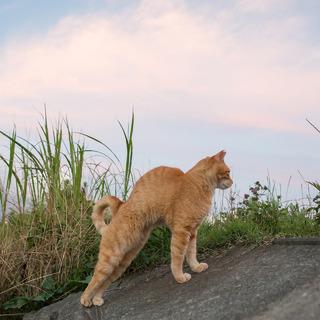 私の猫背は生まれつきである。【水曜日のねこたちへ #78】