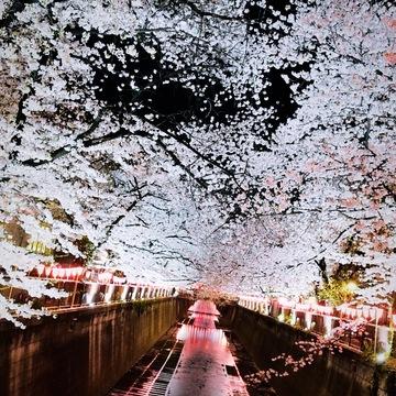Vol.71♡【2019】目黒川の桜・お花見情報