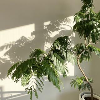 植物と心地良く暮らす。【40代 私の暮らし】