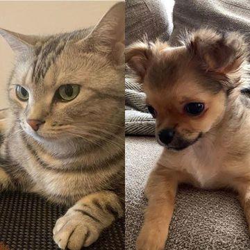 かわいすぎる愛犬&愛猫 photo gallery