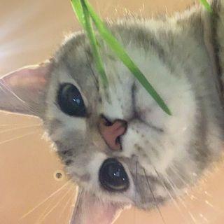 ベジタリアン猫?