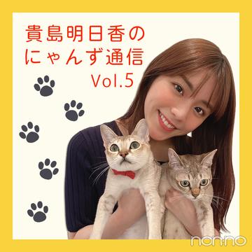 ノンノモデルが愛猫トーク♡ 貴島明日香のにゃんず通信 #05 にゃんず寝顔写真集