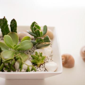 インテリアのグリーン①多肉植物の寄せ植えを、美しく見せる2つのルール