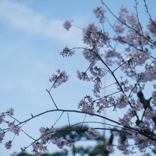 鎌倉に来たら是非立ち寄って欲しい、スタイリッシュなカレー屋さん♫_1_3-2