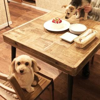 わぁぁぁ~、おいしそうなケーキだ!【わんこLIFE ポール&ケイト #7】