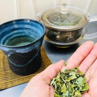 万能茶「モリンガ」で風邪予防&アンチエイジング