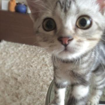 子猫のアラン、近い近い!