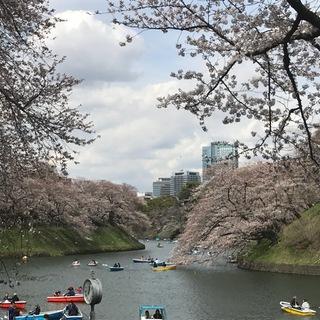 都会のお花見ツアー_1_2-2