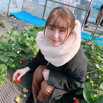 地元 栃木のおすすめ④ いちご狩り編