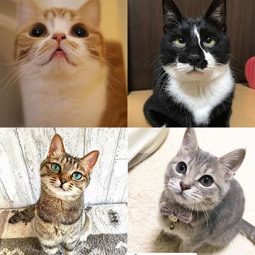 【にゃんスタ厳選集】上目遣いがたまらない!猫たちのかわいいアピールにメロメロ♪