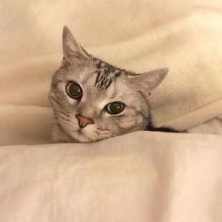 寒いですにゃね
