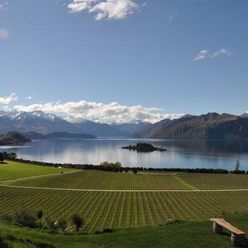 """""""ニュージーランドのロマネ コンティ""""との異名をとる「リッポン」の魅力とは?【飲むんだったら、イケてるワイン/WEB特別篇】"""