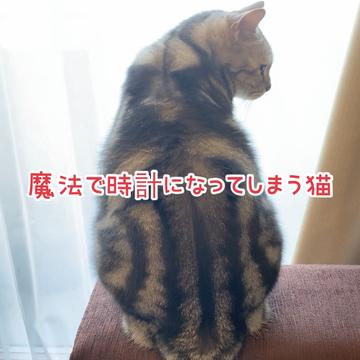 ニャンと!魔法で時計になってしまう猫⁉︎