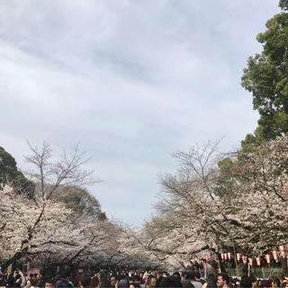 都会のお花見ツアー_1_4-2