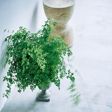 """【グリーンを洗練させるアイデア】欲張らずに""""シンプルな緑""""で安らぎを!"""