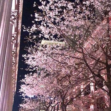"Vol.81♡ ピンク色のライトアップがカワイイ!""日本橋・桜フェスティバル"""