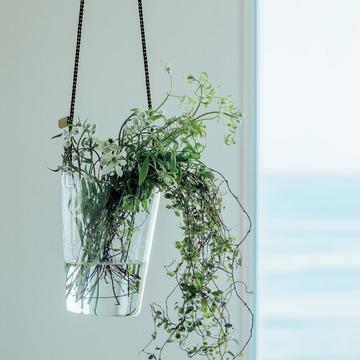 5.つる性植物の性質を生かしてガラス器で空間に風を演出