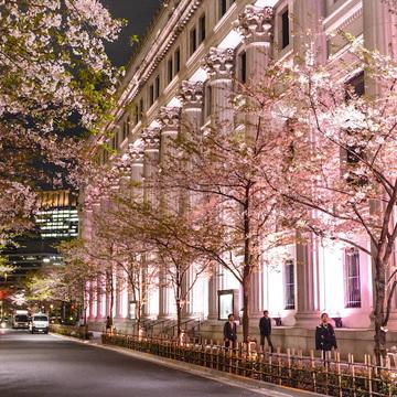 「桜ライトアップ」は、江戸桜通り、コレド室町1~3、東京駅八重洲口グランルーフなどで、3/15(金)~4/7(日)のイベント開催期間に毎日堪能できる
