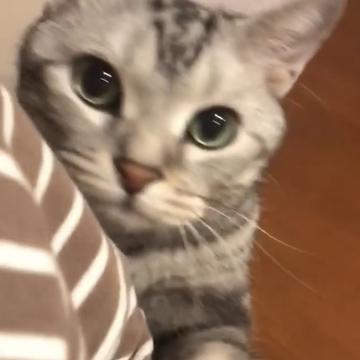 「一緒に来て!」ママを呼ぶ猫(動画)