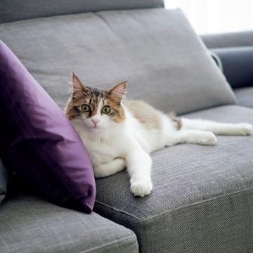 【あの人の溺愛ねこ図鑑 第5回】大草直子さんの愛猫はかわいい一家の見守り役♡