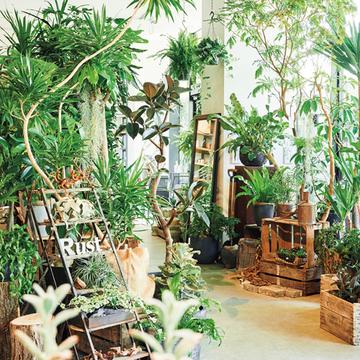 頼れる知識と素敵なセンスがある「都内のグリーンショップ」2選【グリーンを育てる幸せ、飾る楽しみ】