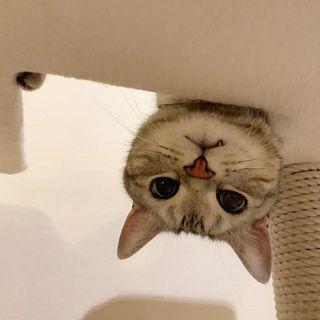 逆さから、こんにゃちわ!