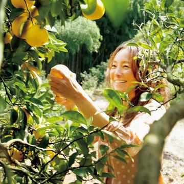 気品漂う香りのベルガモットを栽培する『みかん家 にしごみ』【有元葉子、美味しいものは高知にあり】